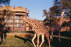 Animal Kindgom Lodge