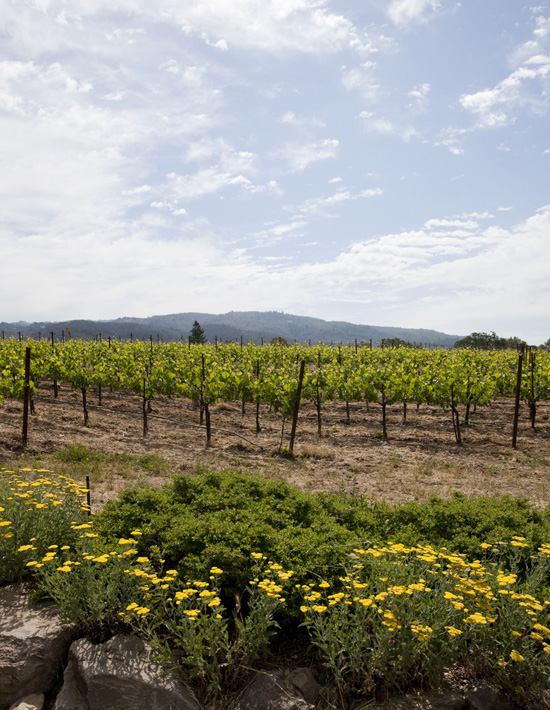 Lasseter Family Winery in Sonoma Valley