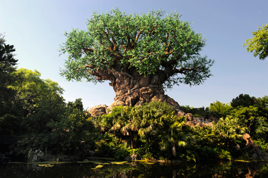 watch the tree of life grow at disney s animal kingdom in this time